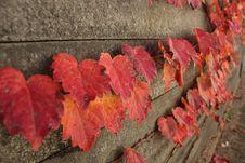 Free Leaf, Autumn, Maple Leaf, Petal Royalty Free Stock Photo - 110614615