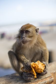 Free Mammal, Macaque, Fauna, Primate Royalty Free Stock Photo - 110614725