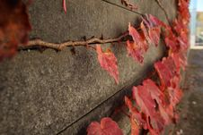 Free Leaf, Autumn, Soil, Branch Stock Images - 110614774