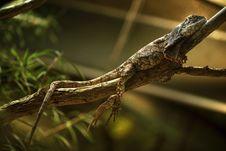 Free Reptile, Fauna, Lizard, Scaled Reptile Royalty Free Stock Image - 110614826