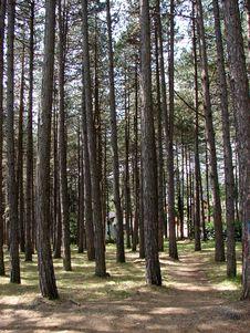 Free Tree, Ecosystem, Woodland, Grove Stock Photo - 110615090