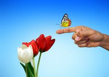 Free Flower, Moths And Butterflies, Butterfly, Insect Royalty Free Stock Photos - 110615258