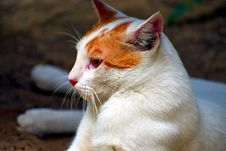 Free Cat, Whiskers, Small To Medium Sized Cats, Fauna Royalty Free Stock Photo - 110615455