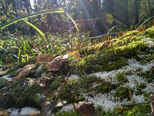 Free Plant, Vegetation, Ecosystem, Moss Royalty Free Stock Photo - 110615885