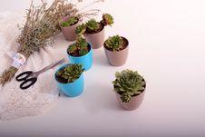 Free Plant, Flowerpot, Houseplant, Cactus Royalty Free Stock Images - 110616079