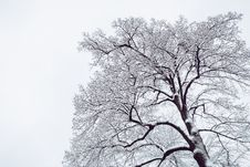 Free Snow Coated Tree Illustration Royalty Free Stock Photo - 110655065