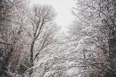 Free Snowy Leafless Trees Royalty Free Stock Photo - 110655085