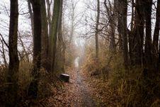 Free Photo Of Dirt Pathway Between Trees Stock Photo - 110655160