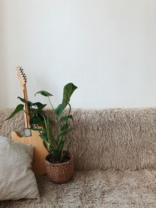 Free Green Leaf Plant Beside Brown Electric Guitar On Sofa Stock Photography - 110655272