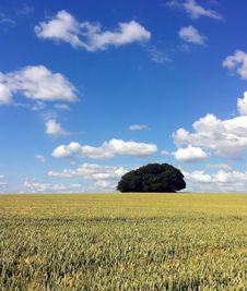 Free Green Leaf Tree And Grass Field Under Blue Sky And White Clouds Stock Photography - 110796292