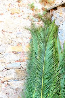 Free Palm Leaves Leaning On Brickwalls Royalty Free Stock Images - 110796319