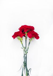 Free Flatlay Photography Of Red Carnations Stock Images - 110796344