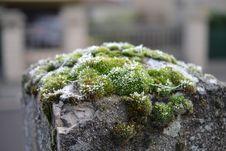 Free Close-up Photography Of Mossy Rocks Stock Photo - 110796350
