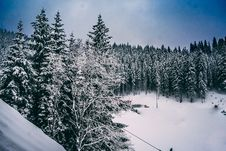 Free Green Pine Trees Covered With Snow Under Cloudy Blue Sky Royalty Free Stock Images - 110796479
