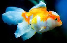 Free Orange And White Fish Stock Photo - 110885550