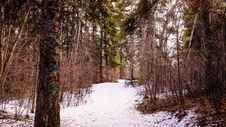 Free Snow, Winter, Nature, Woodland Royalty Free Stock Photo - 110936245