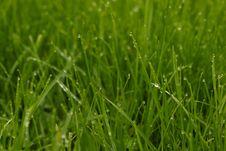 Free Grass, Field, Grassland, Moisture Royalty Free Stock Photo - 110936865