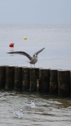 Free Water, Bird, Sea, Seabird Stock Photography - 110938882