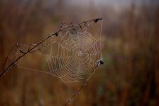 Free Spider Web, Spider, Arachnid, Morning Royalty Free Stock Images - 110949849