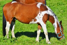Free Horse, Mare, Horse Like Mammal, Grass Royalty Free Stock Photography - 110950157