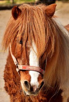 Free Horse, Mane, Bridle, Horse Like Mammal Royalty Free Stock Photos - 110950688
