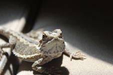 Free Reptile, Scaled Reptile, Lizard, Fauna Royalty Free Stock Photo - 110950865