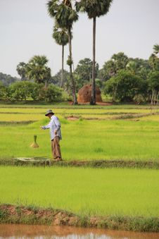 Free Paddy Field, Field, Agriculture, Grass Stock Photos - 110951143