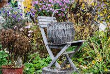 Free Plant, Flower, Garden, Flora Stock Photos - 110951943