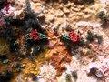 Free Nudibranch Stock Image - 1112591