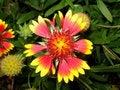 Free Garden Flower Royalty Free Stock Photos - 1115258