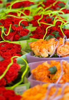 Free Colorful Roses Stock Photos - 1110063