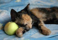 Free Sleeping Kitten Royalty Free Stock Photography - 1110147