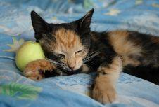 Free Sleeping Kitten Stock Photos - 1110173