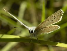 Free Butterfly Stock Photos - 1110553