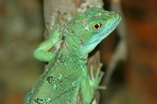 Free Water Dragon 2 Royalty Free Stock Images - 1110689