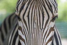 Free Eyes Of Zebra Royalty Free Stock Photo - 1111475