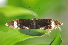 Free Butterfly Stock Images - 1111504