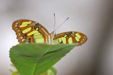 Free Butterfly Stock Image - 1111511