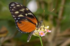 Free Butterfly Stock Photos - 1111523