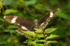 Free Butterfly Royalty Free Stock Image - 1111526