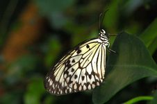 Free Butterfly Stock Images - 1111554