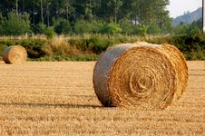 Free Bundles Of Straw Stock Photography - 1113372