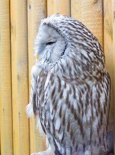 Free Owl Stock Photography - 1113382