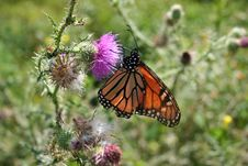 Free Butterfly Haven Stock Photography - 1114892
