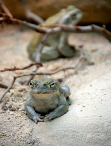 Free Nice Toad 3 Royalty Free Stock Photography - 1115197