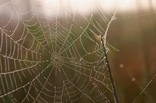 Free Cobwebs At Dawn Royalty Free Stock Photo - 1116225