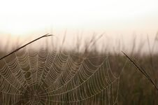 Free Cobwebs At Dawn Royalty Free Stock Photos - 1116228