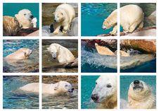 Free PolarMontage Stock Photography - 1116732