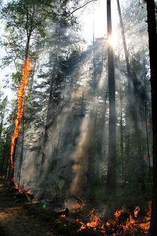 Free Forest Fire Royalty Free Stock Image - 1117406