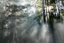 Free Forest Fire Royalty Free Stock Photography - 1117417